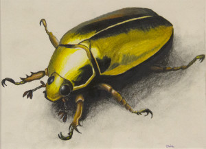 Claire Gold Beetle